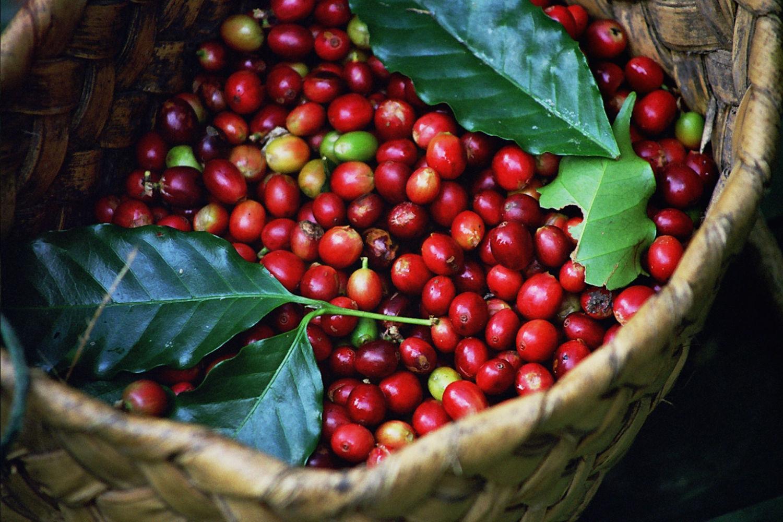 #arabica #coffee #latteart #barista #coffeemorning #coffeeshop #coffeeroasting